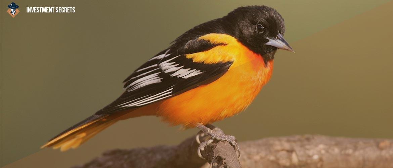 птицы заработок на яйцах